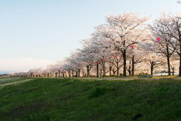 さくら市 | ベリーマッチとちぎ 栃木県移住・定住促進サイト