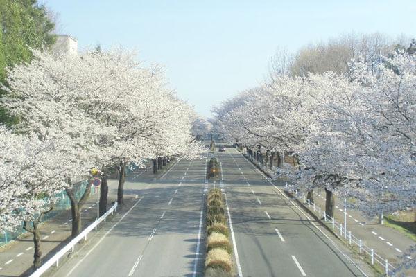 芳賀町のイメージ