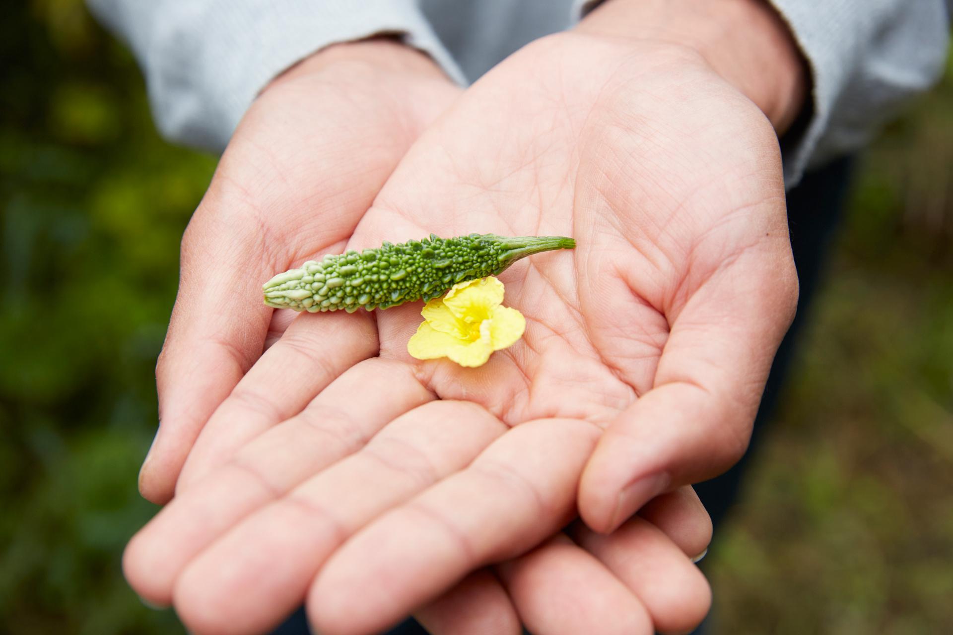 小さいサイズで収穫した野菜