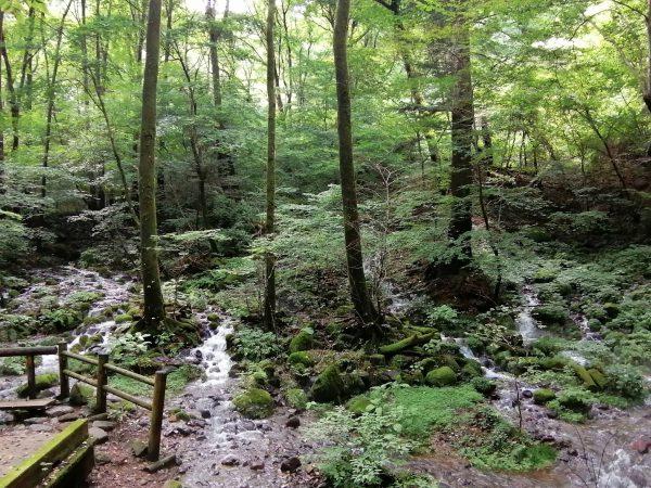 Shioya~Yaita水源への旅 日本百名水と蛍狩り