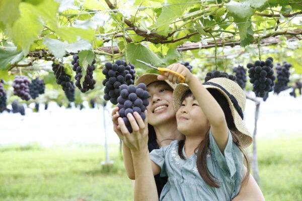 子育て世代の移住計画相談会〜栃木市で仕事と子育ての両立を実現する〜